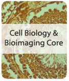 Cell Biology & Bioimaging Core